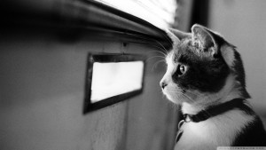 waiting-cat_00446090