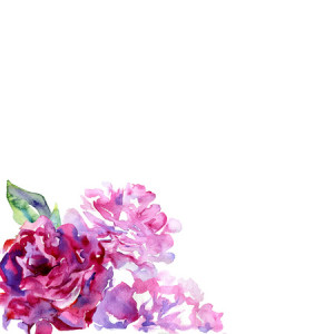 42090423 - white background with violet, pink peons and copy space